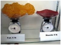 2.13. Вес жира